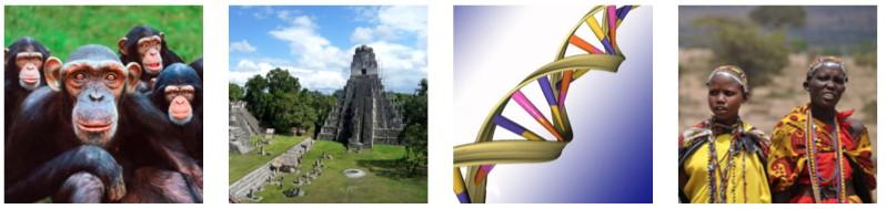 Picture of chimpanzees; Tikal; Drawing of DNA; Massai women