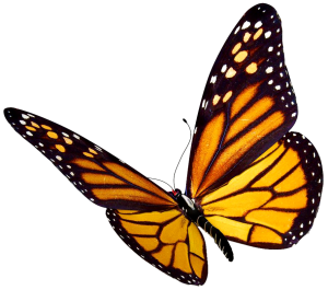butterfly-png-flying