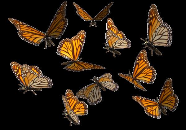 monarch_page