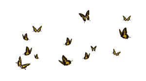 stock___butterflies_yellow_black_by_jassy2012-d5deqnw